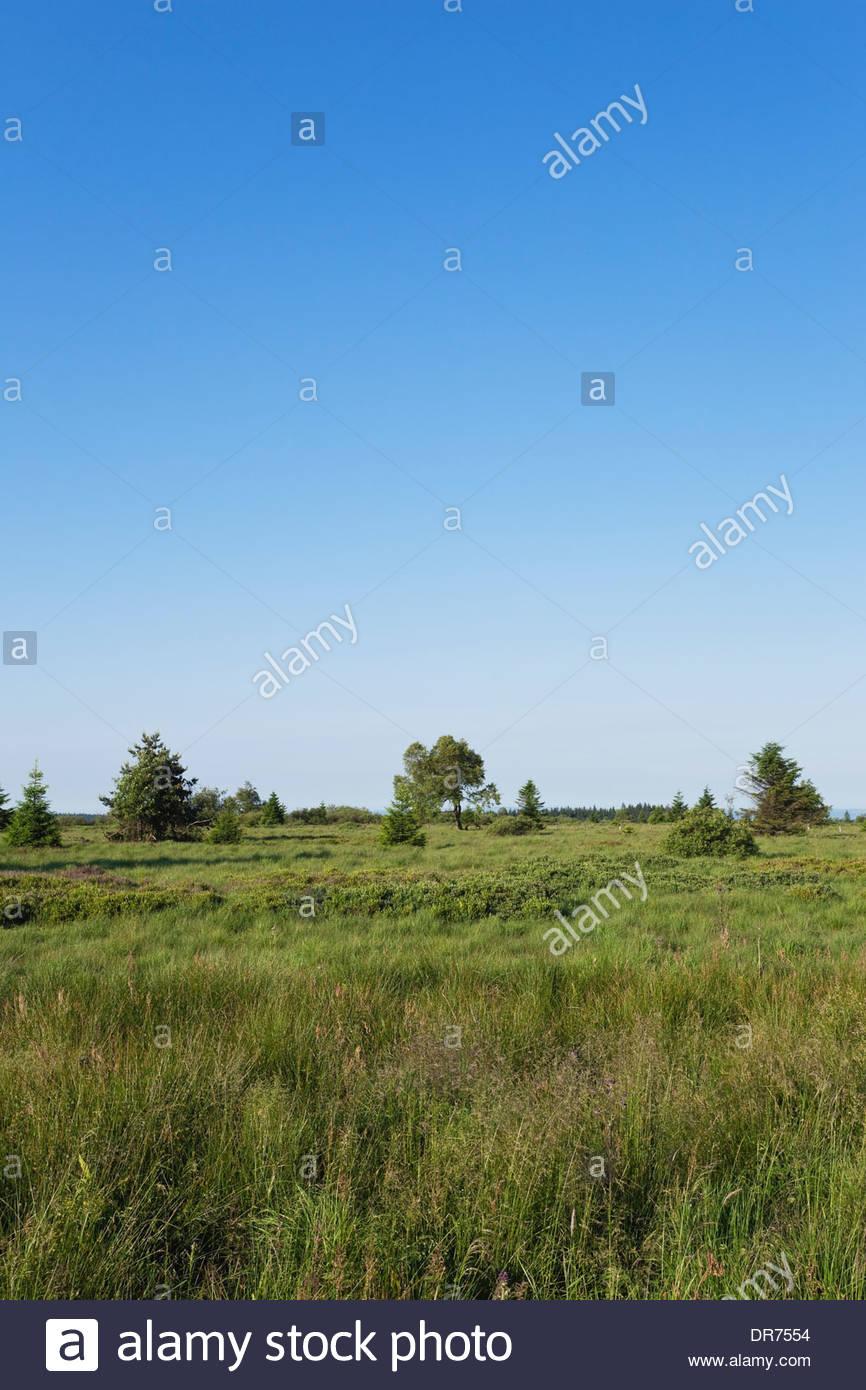Belgium, Wallonia, High Fens - Eifel Nature Park, hill moor Stock Photo