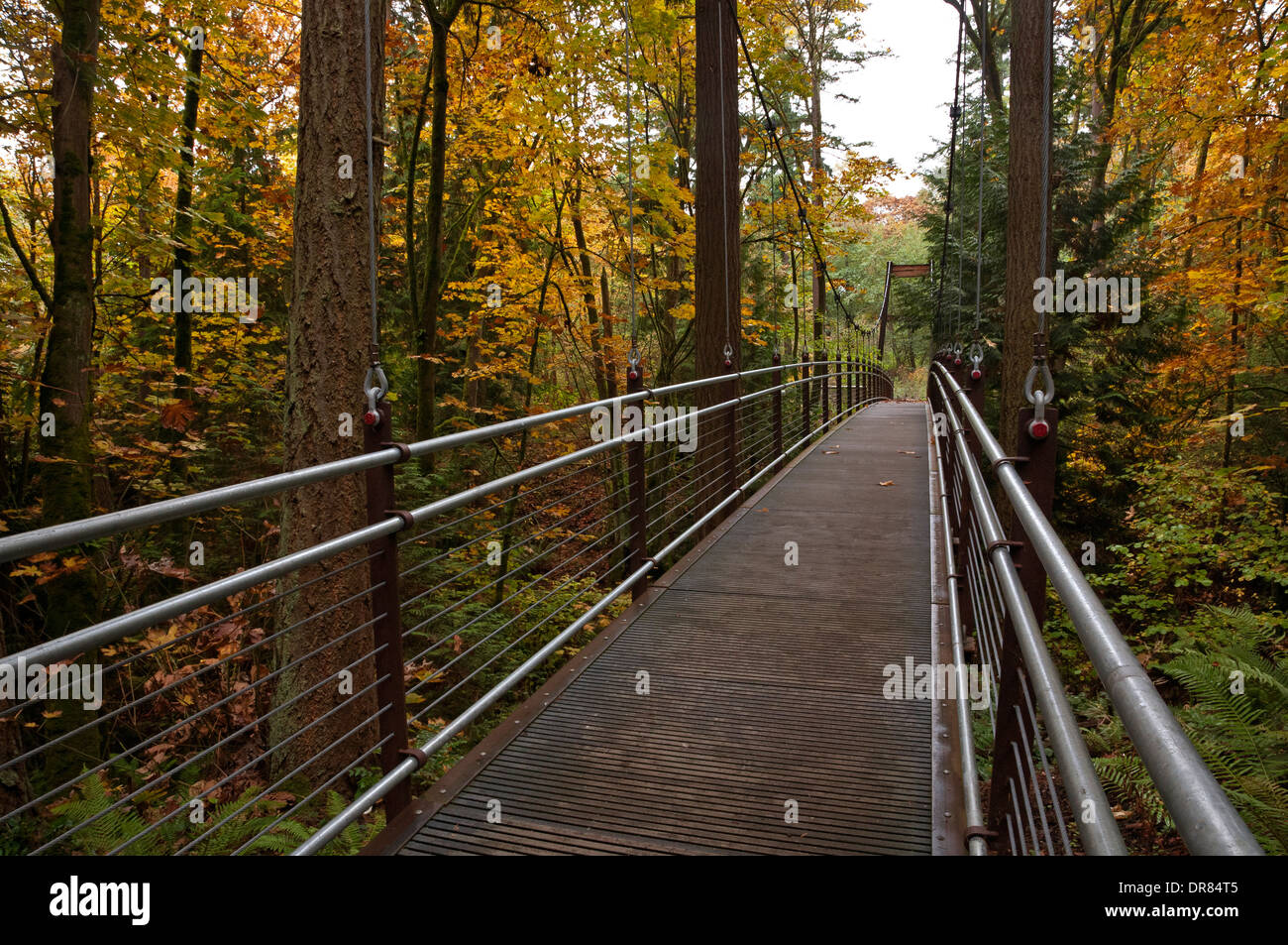 WASHINGTON - Suspension Bridge on the Ravine Experience Trail in the ...
