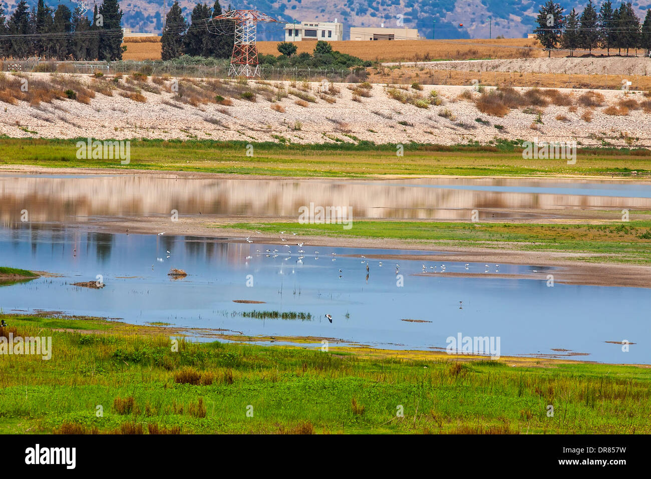 ponds water surface in springtime with birds - Stock Image