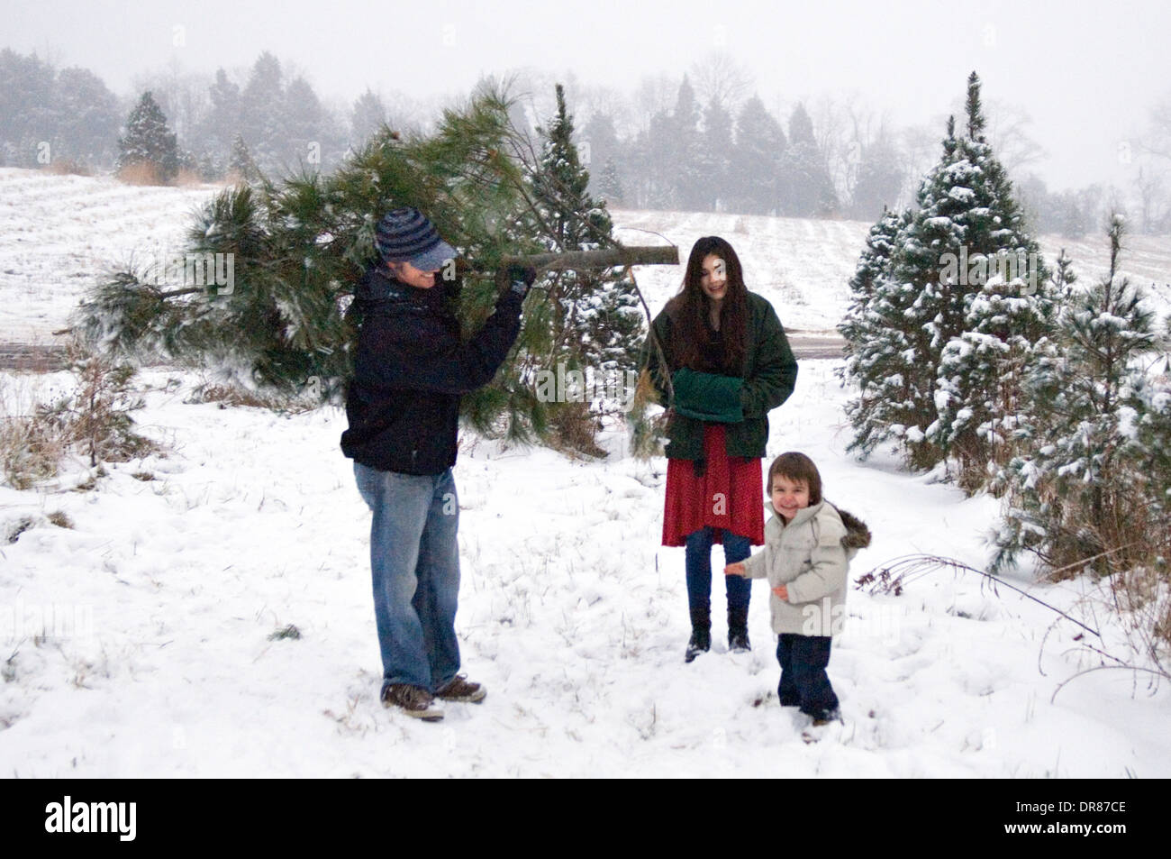 Young Family Getting their Christmas Tree on a You Cut Christmas ...