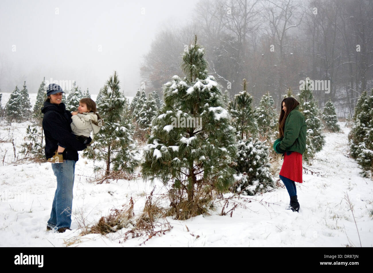 young family choosing their christmas tree on a you cut christmas tree farm in southern indiana