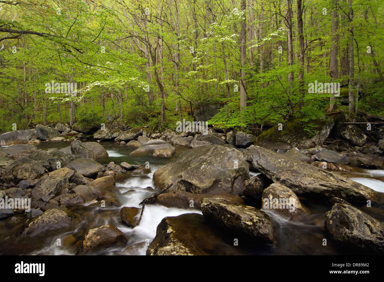 Middle Prong of the Little Pigeon River in the Great Smoky Mountains National Park in Tennessee - Stock Image