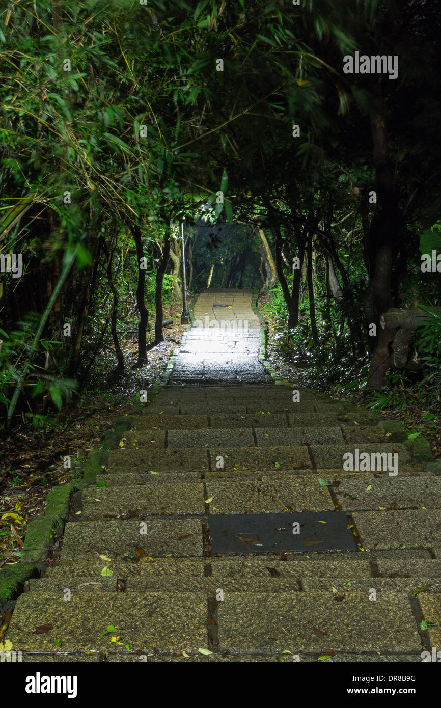 Stone stairs under trees and plants at night, looking down - Stock Image