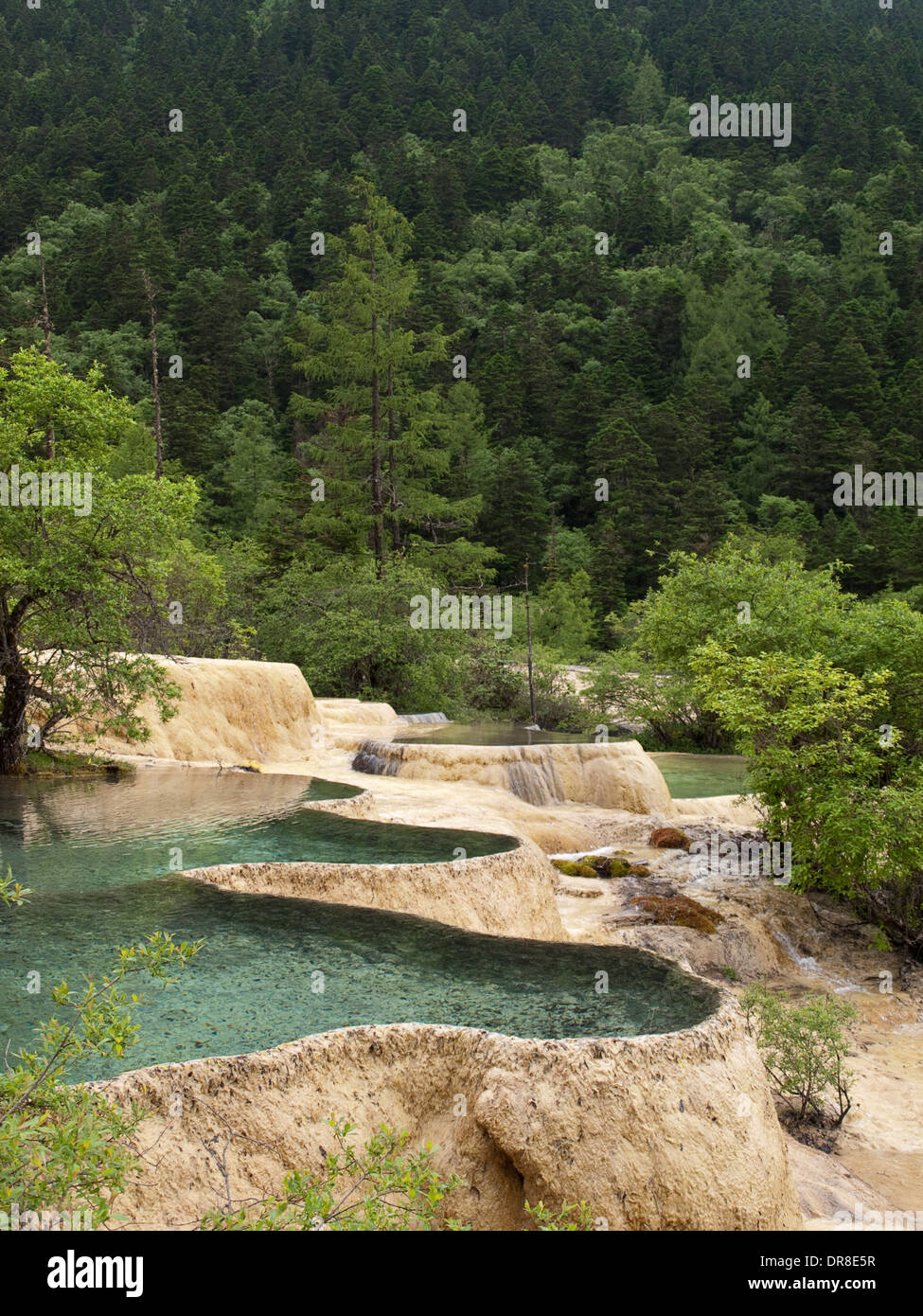 Rhododendron Pond in Huanglong, China - Stock Image