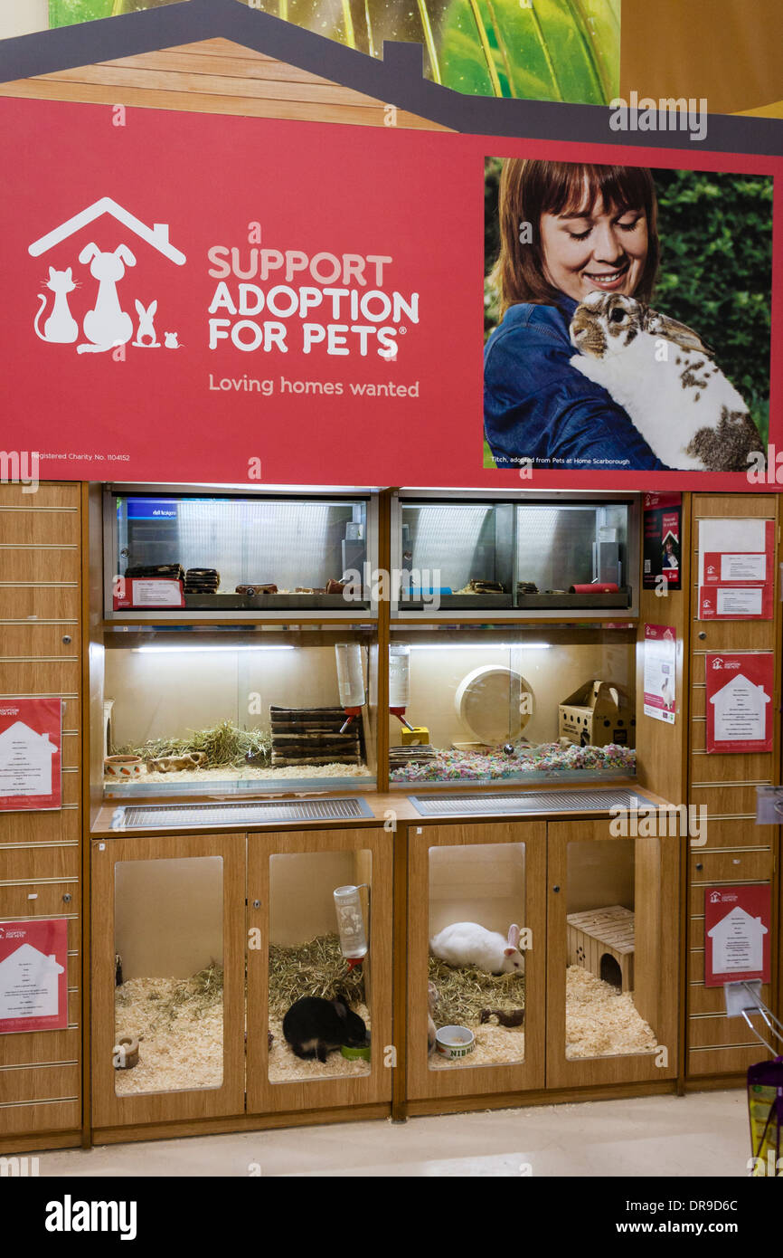 Pets (small mammals) for adoption in a Pets at Home store. Reading, Berkshire, England, GB, UK. - Stock Image