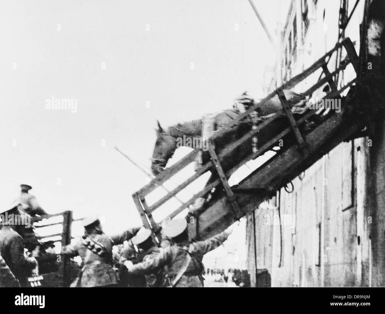 Loading horses, World War I - Stock Image