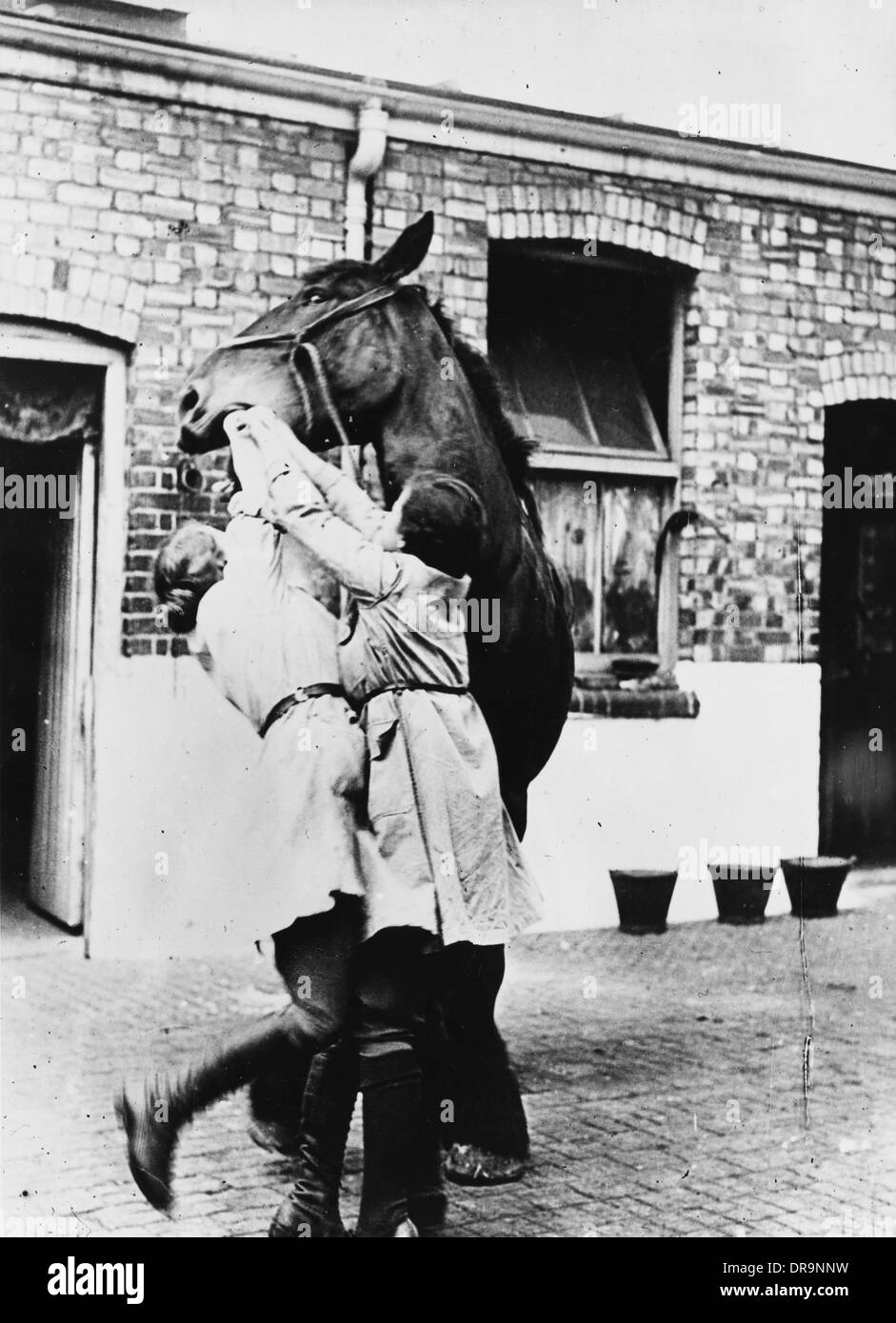 Welfare of horses on His Majesty's Service - Stock Image