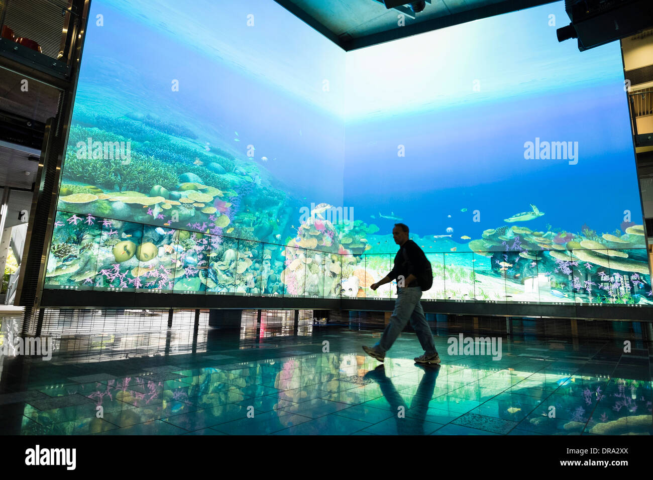 Large multimedia screen showing virtual reef at The Cube centre at Queensland University of Technology QUT in Brisbane Australia - Stock Image