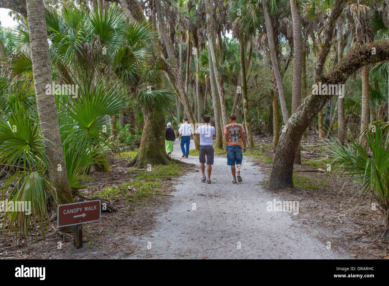 People walking on William S Boylston nature trail leading to Canopy walk in Myakka River State Park Sarasota Florida Stock Photo