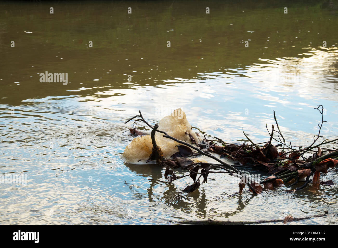 pollution scum floating on river Lud Hubbards Hills, Louth, Lincolnshire, UK, GB, England - Stock Image