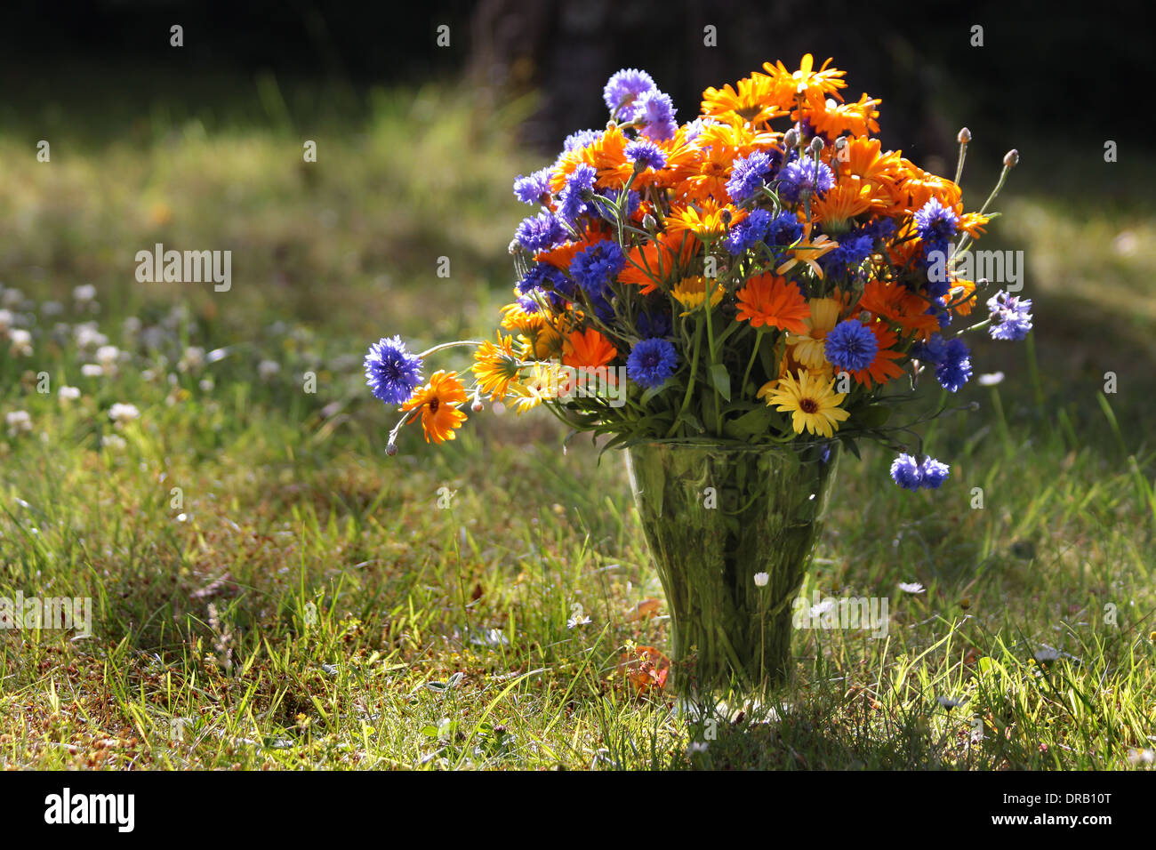 Colorful flower bouquet in a summer meadow - Stock Image