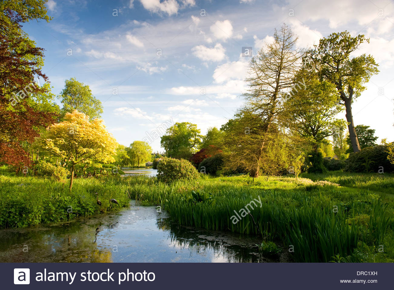 Hoveton Hall, Norfolk private country garden sky spring colourful water lake peaceful contemplative nature natural scene trees - Stock Image