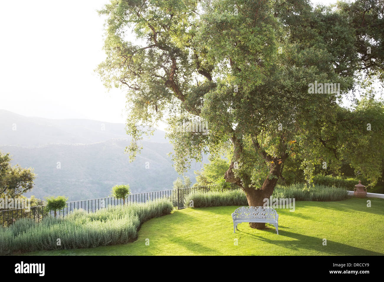 Bench under tree in calm park Stock Photo