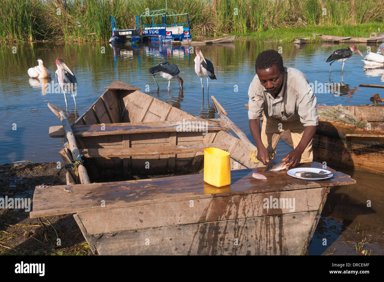 Fisherman cutting fish, Awasa, Ethiopia - Stock Image