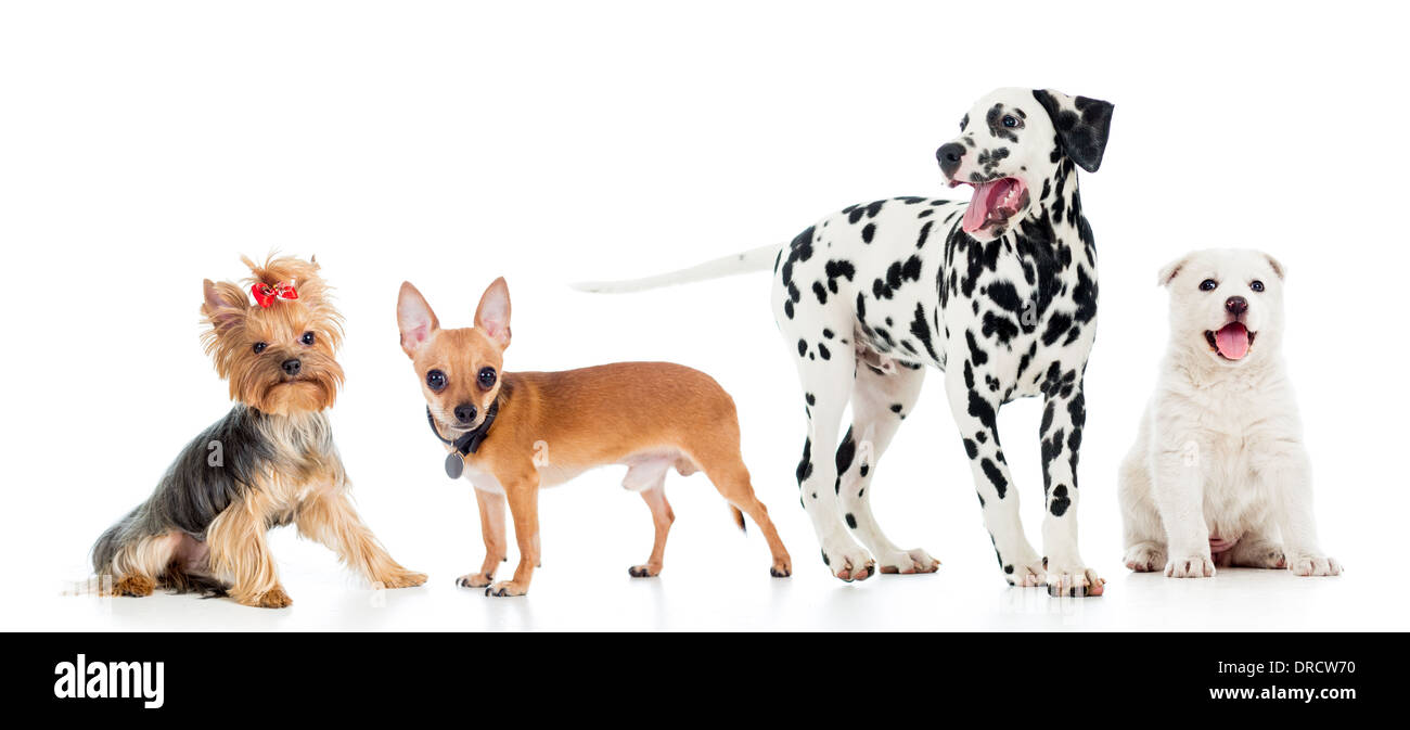 set of pets dogs isolated on white background - Stock Image