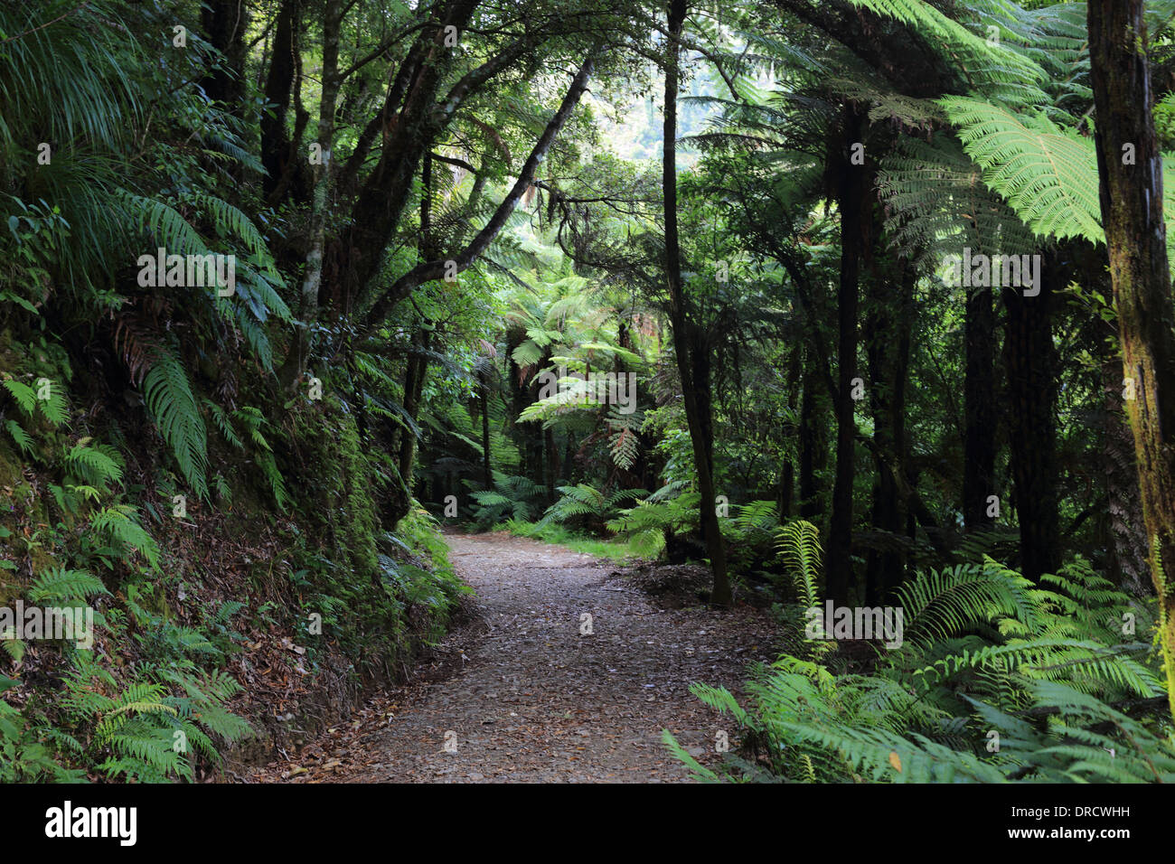 Trail to Tauranga Bridge, Waioeka Gorge Scenic Reserve and River, State Highway 2, East Cape Area, North Island, New Zealand - Stock Image