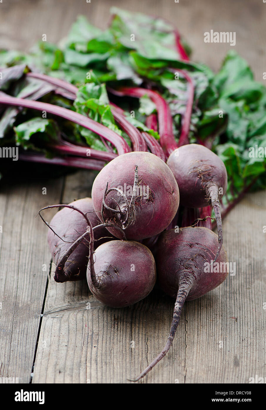A freshly picked bunch of beetroot - Stock Image