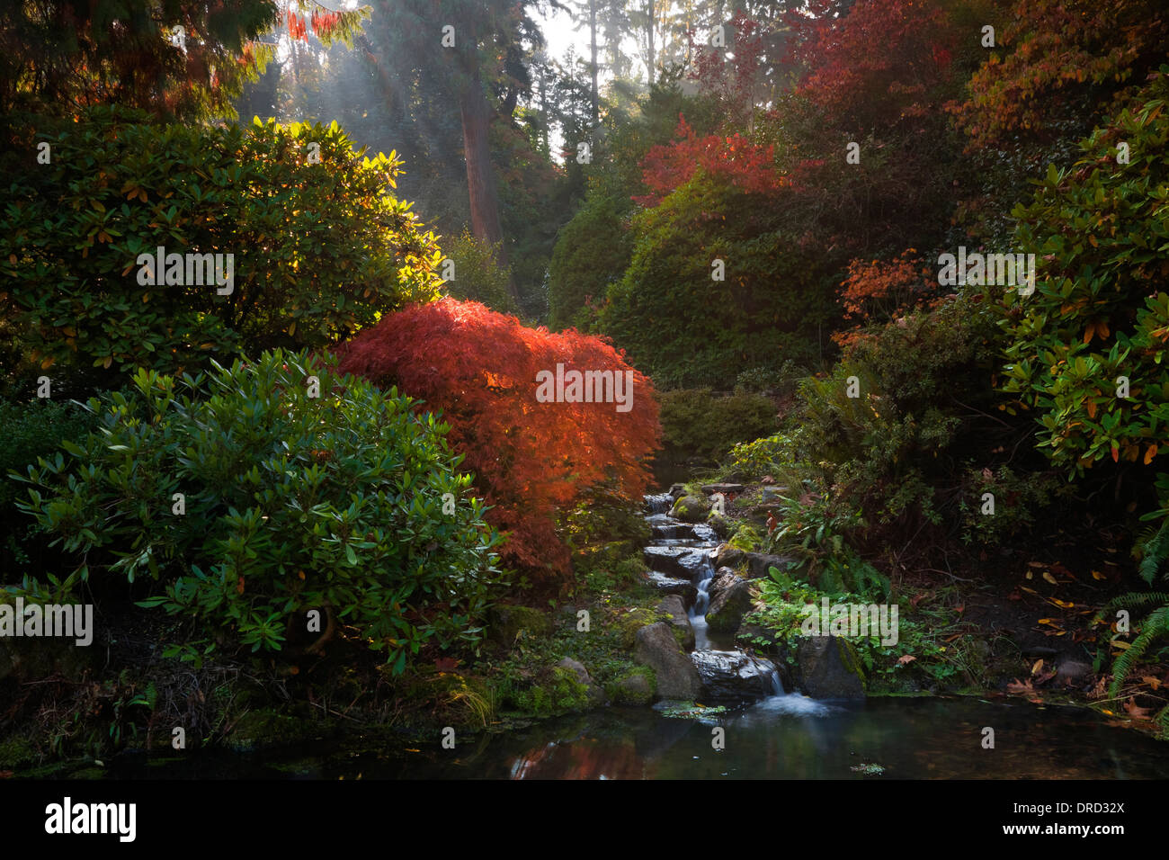 Kubota Garden Seattle Stock Photos & Kubota Garden Seattle Stock ...