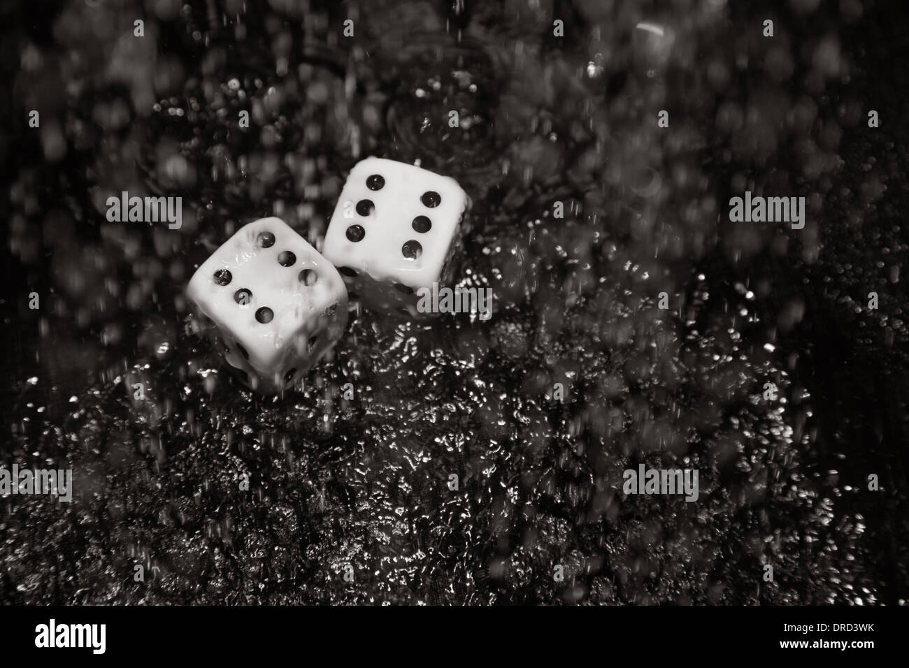 Gambling dices under the rain. Close-up - Stock Image