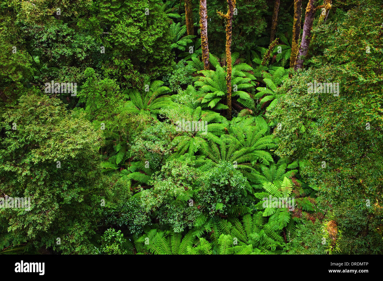 Rainforest in the rain from the Tree Top Walk - Stock Image