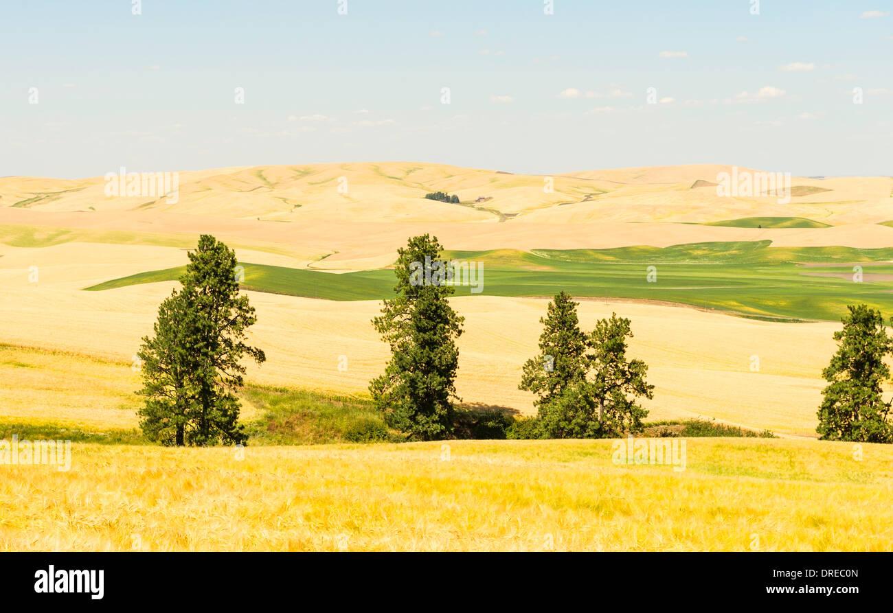 View of the Palouse Hills from Kamiak Butte State Park, Whitman County, Washington, USA. Stock Photo