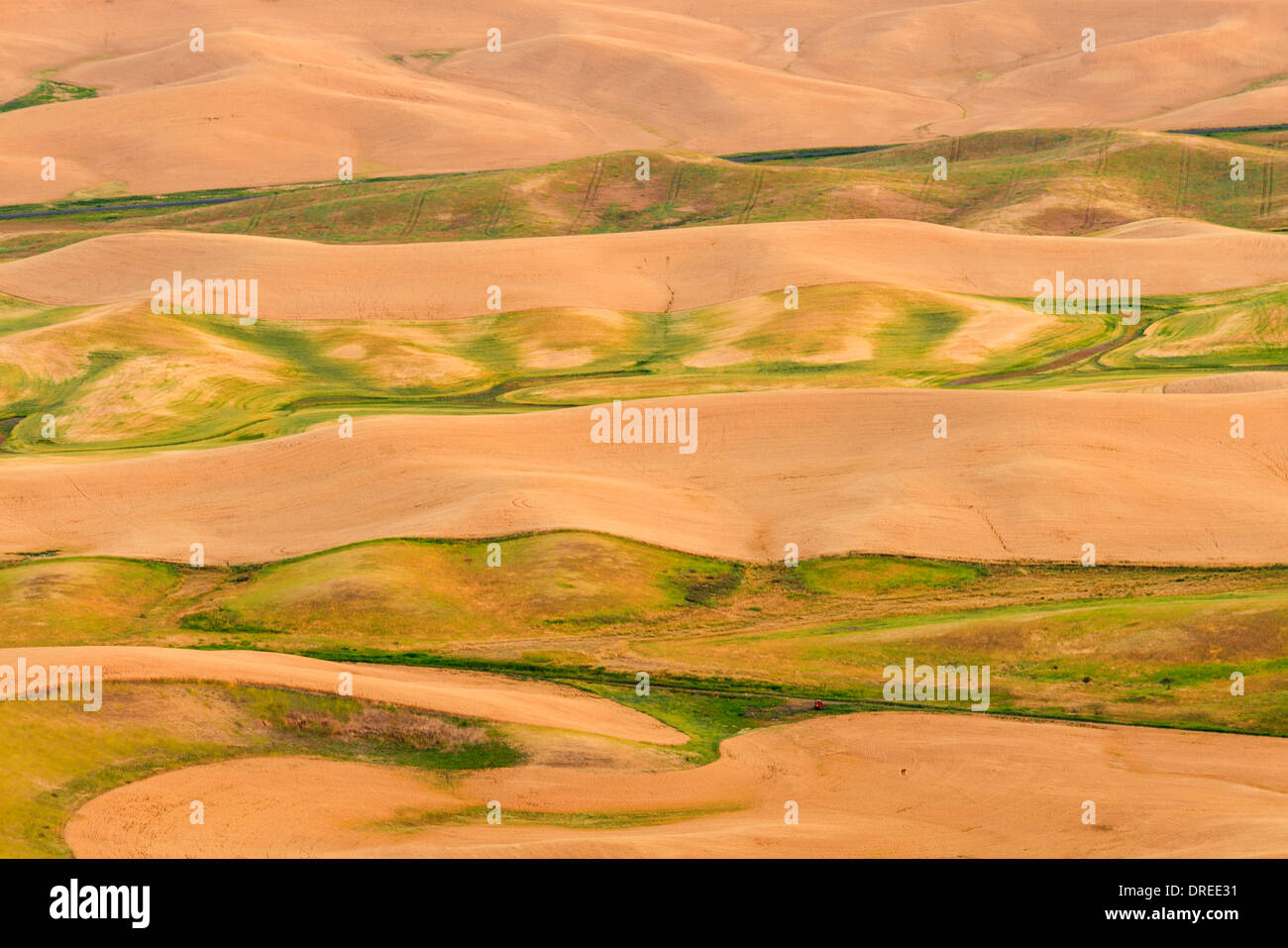 View of the Palouse Hills of Whitman County, Washington State, USA, seen from the top of Steptoe Butte State Park. Stock Photo