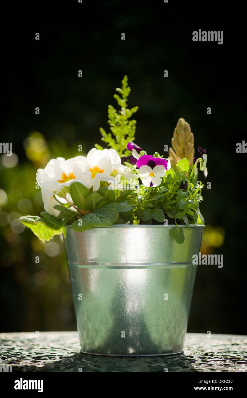 Potted Plant display on garden table. - Stock Image