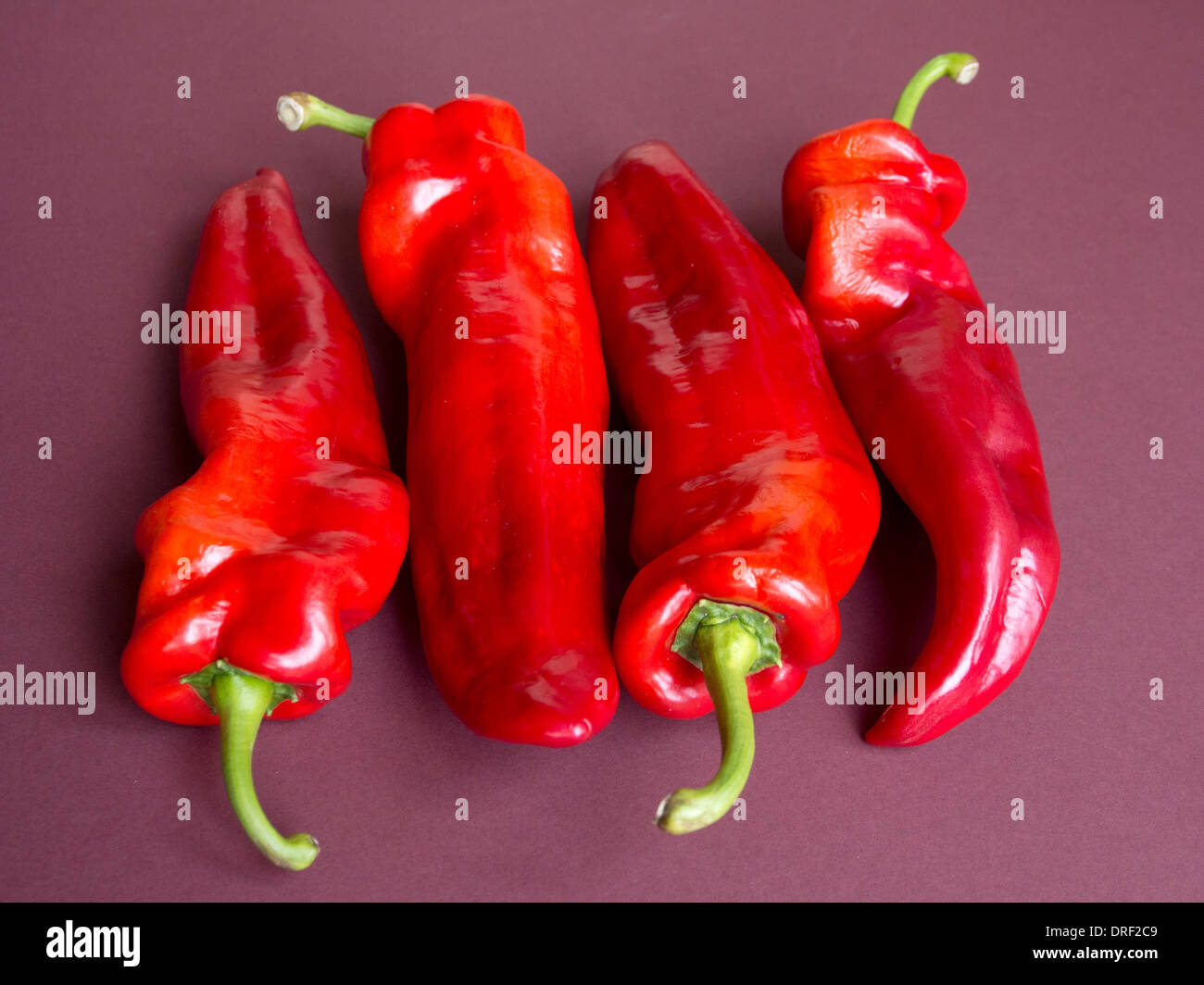 a still life of four shiny red capsicum peppers 'head-to-tail' on a plain maroon background - Stock Image