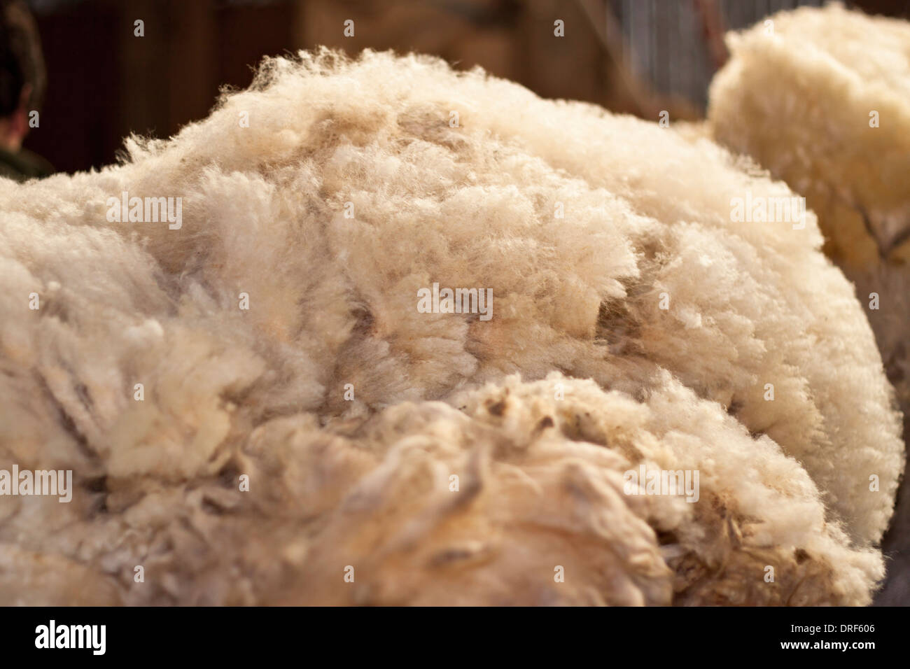 Detail of sheared wool. - Stock Image
