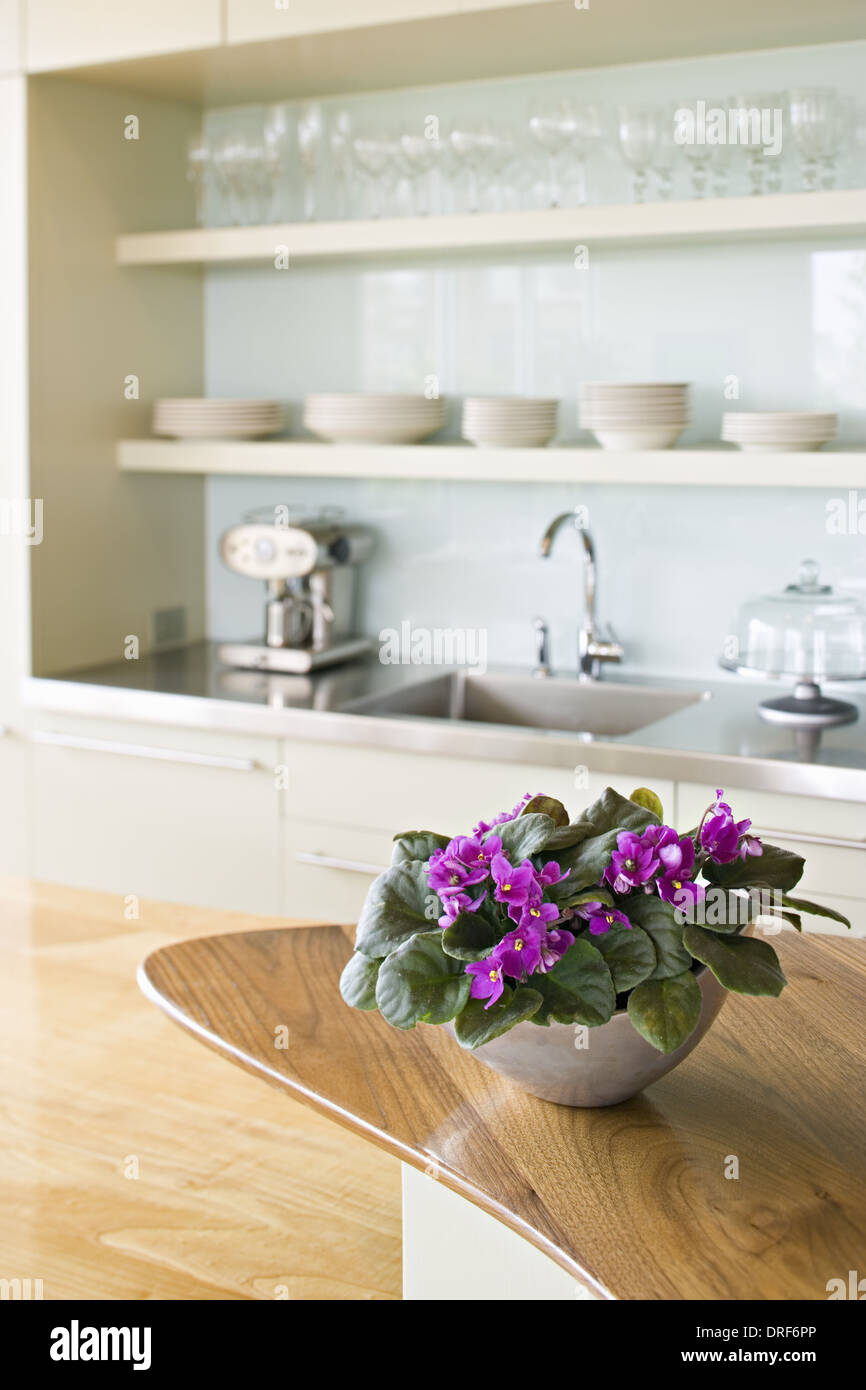 Maryland USA farmhouse kitchen bowl of African violet flower - Stock Image