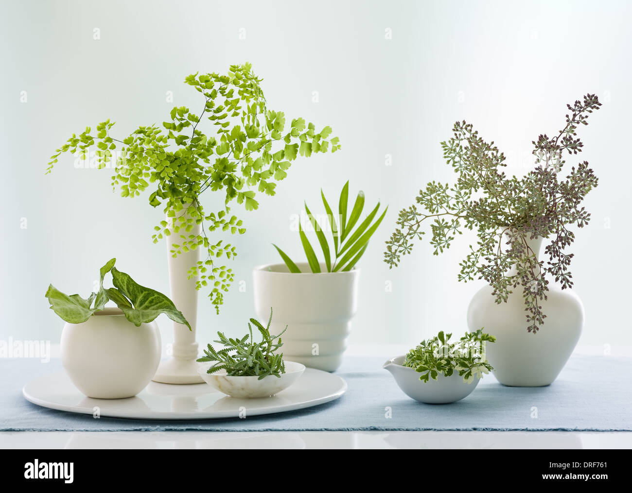 Maryland USA containers jugs variety of green leaves Studio - Stock Image