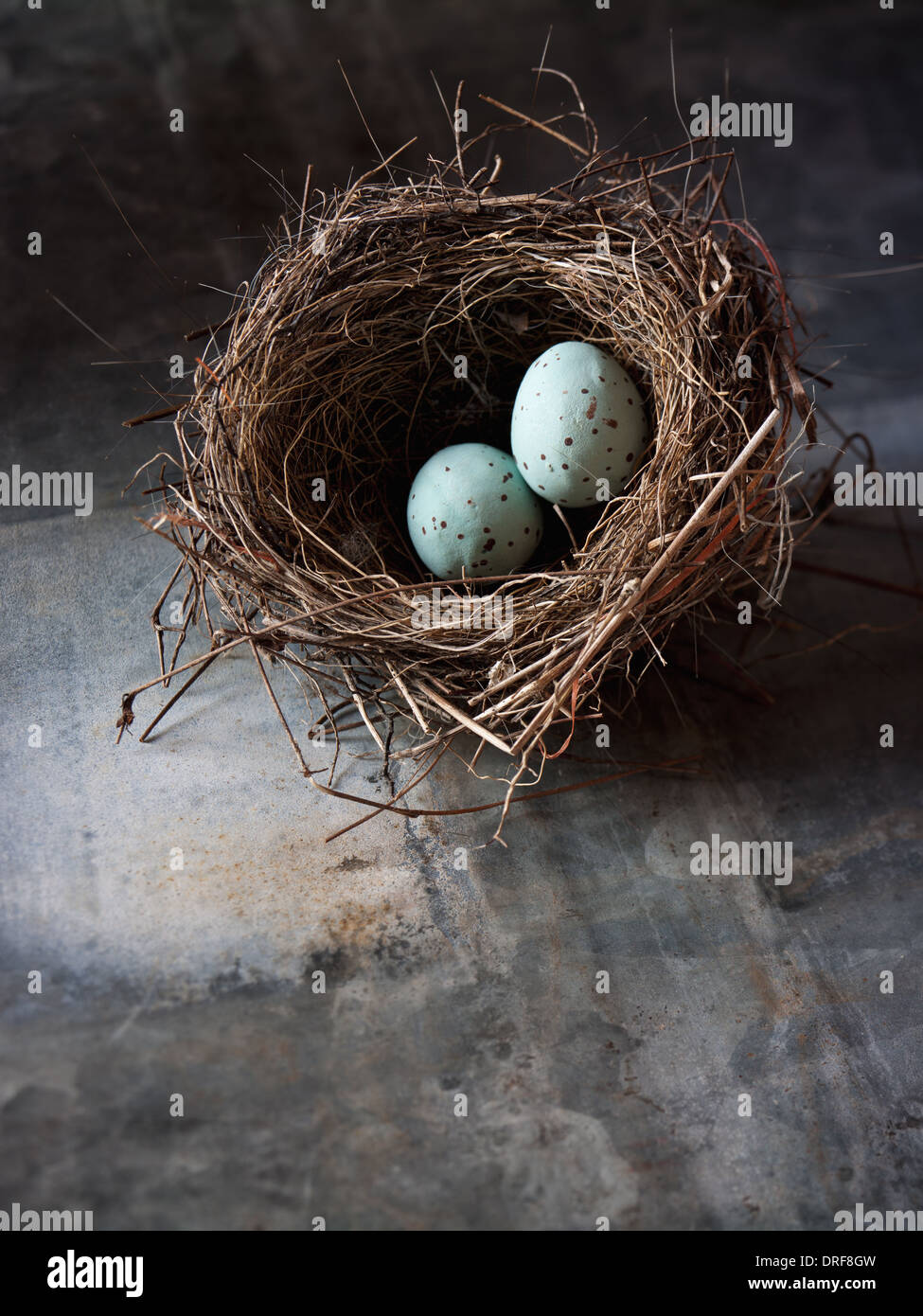 Maryland USA woven bird's nest Two small turquoise eggs - Stock Image