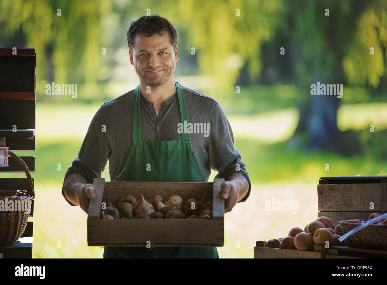 New York state USA man with box of freshly picked fruit - Stock Image