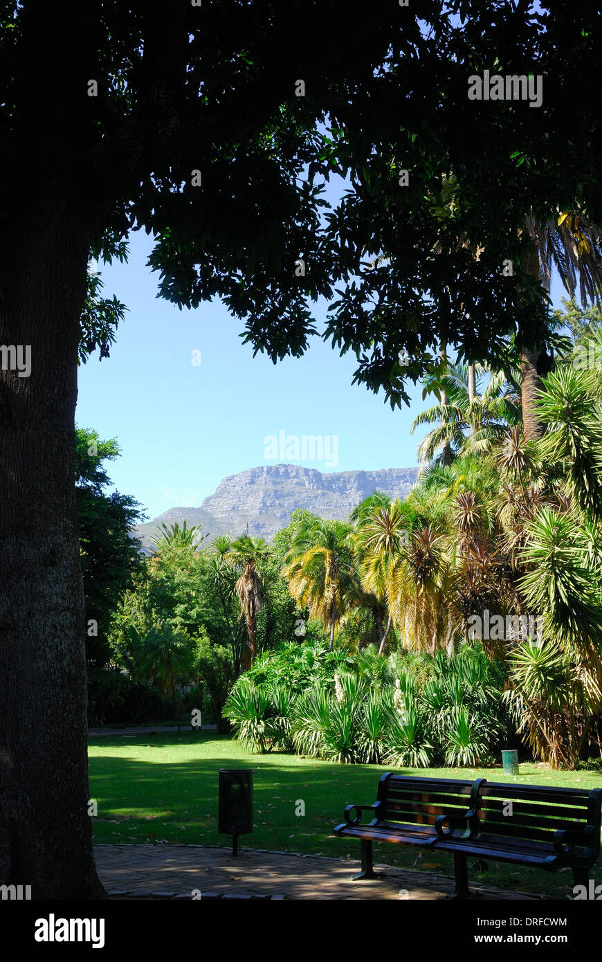 View of Company's garden in Cape town, with Table mountain in the background - Stock Image