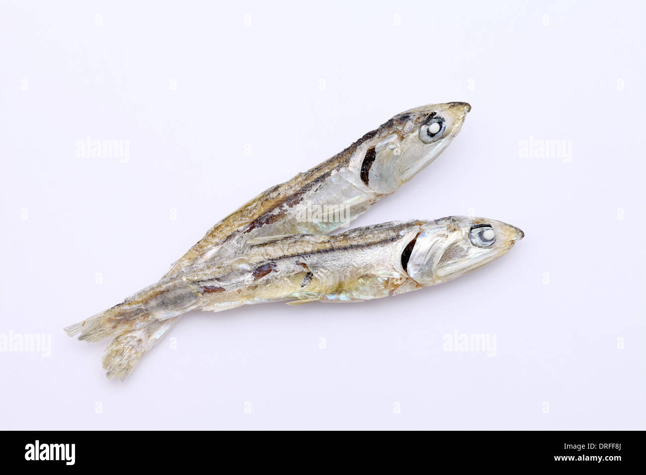 Dried small fish used in japanese cuisine, on white background - Stock Image