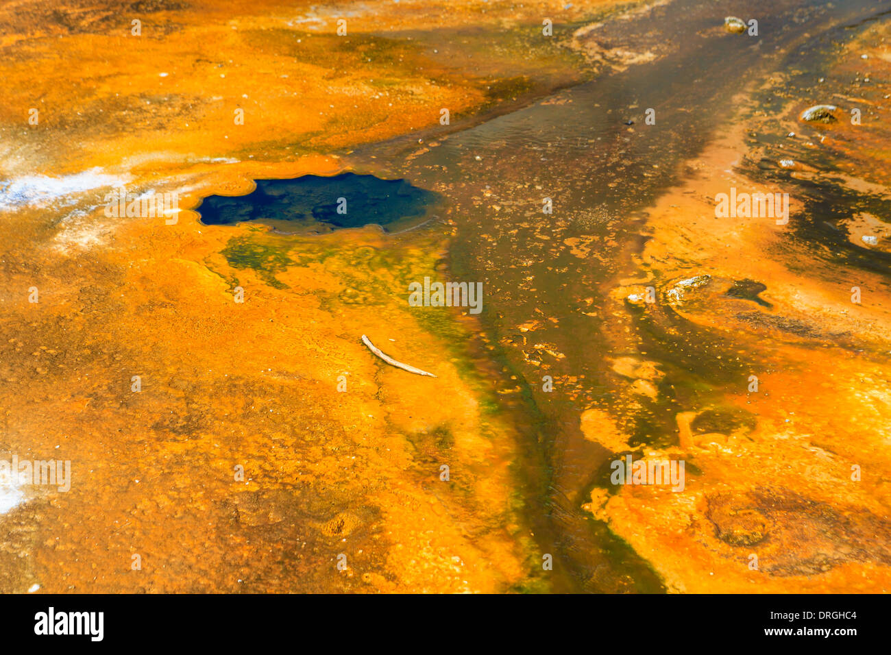 Microbial mats in geothermal pools, Yellowstone National Park ,Wyoming - Stock Image