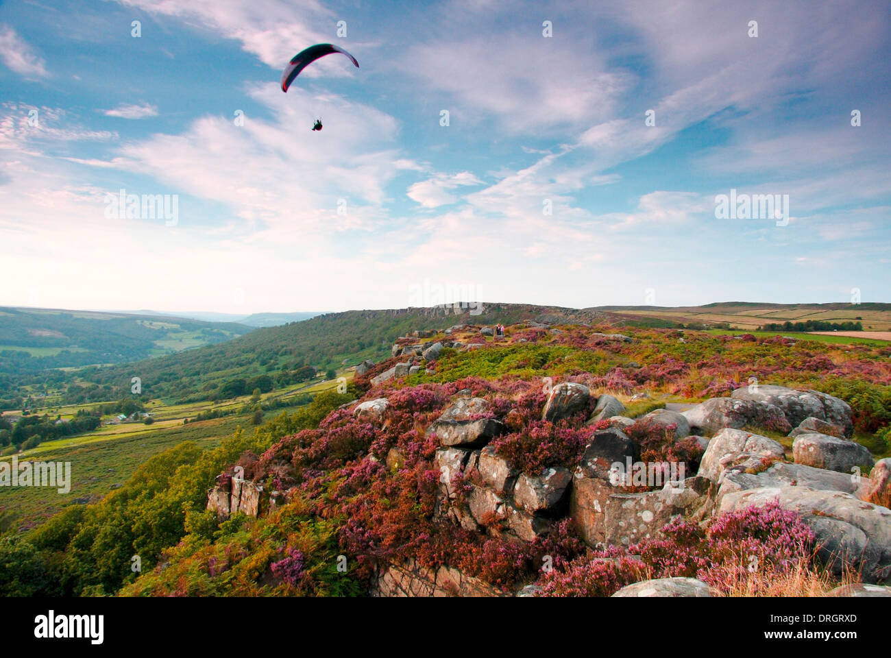 Paraglider over a heather-clad Curbar Edge, in the Dark Peak area of the Peak District National Park, Derbyshire, UK - Stock Image