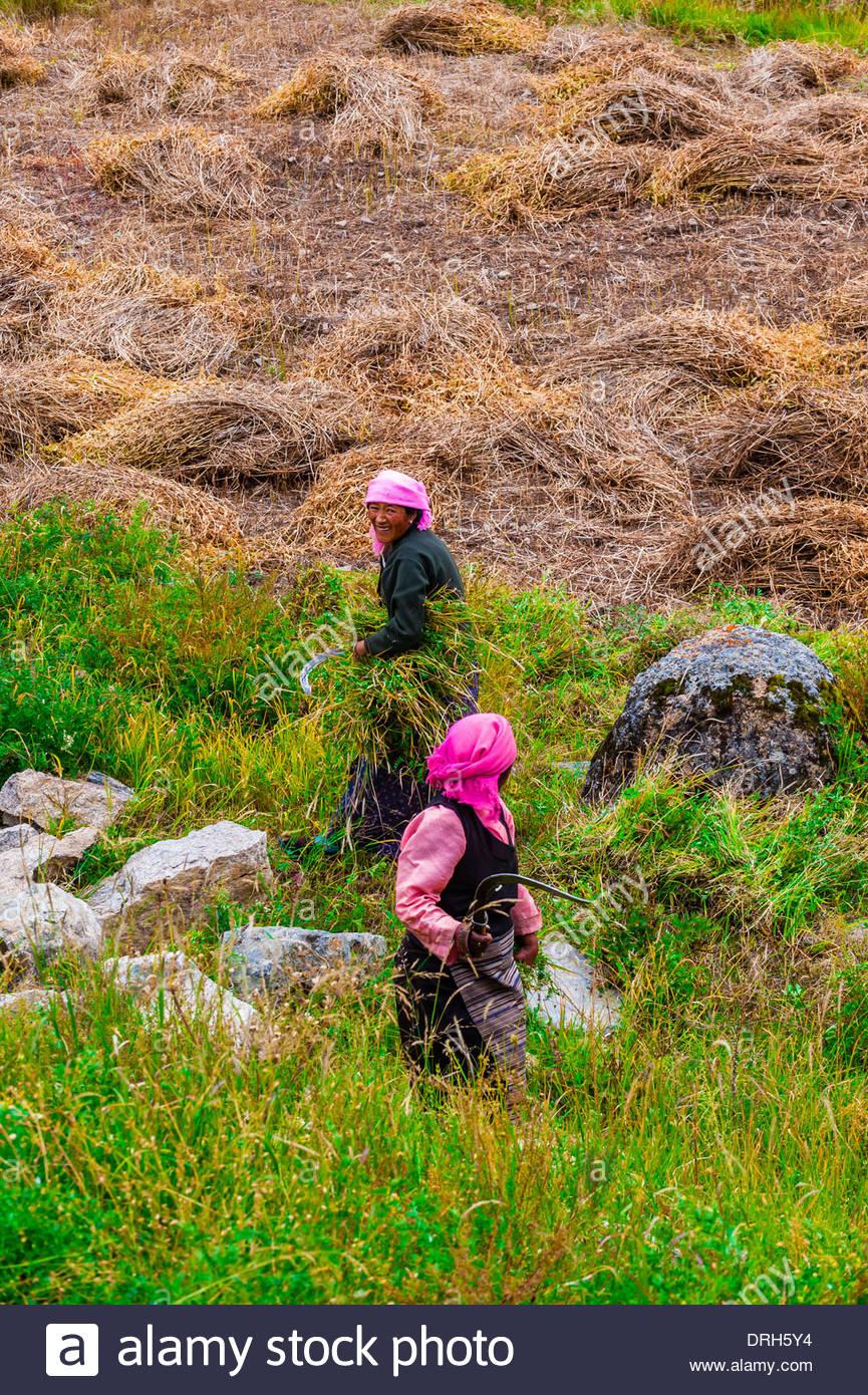 Doilungdeqen, Tibet (Xizang), China. - Stock Image