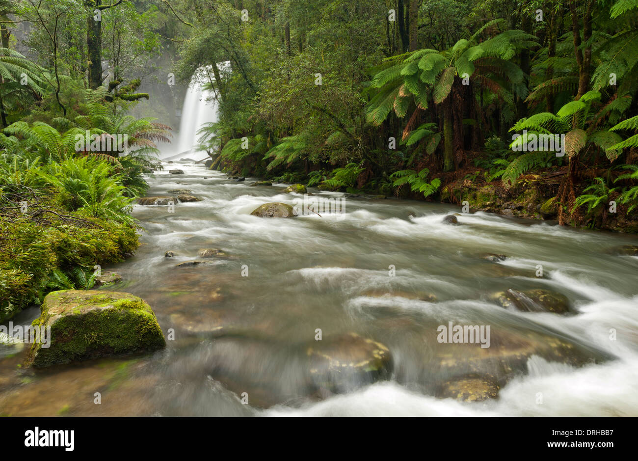 Hopetoun Falls in a fern gully in the Great Otways National Park, Victoria, Australia. - Stock Image