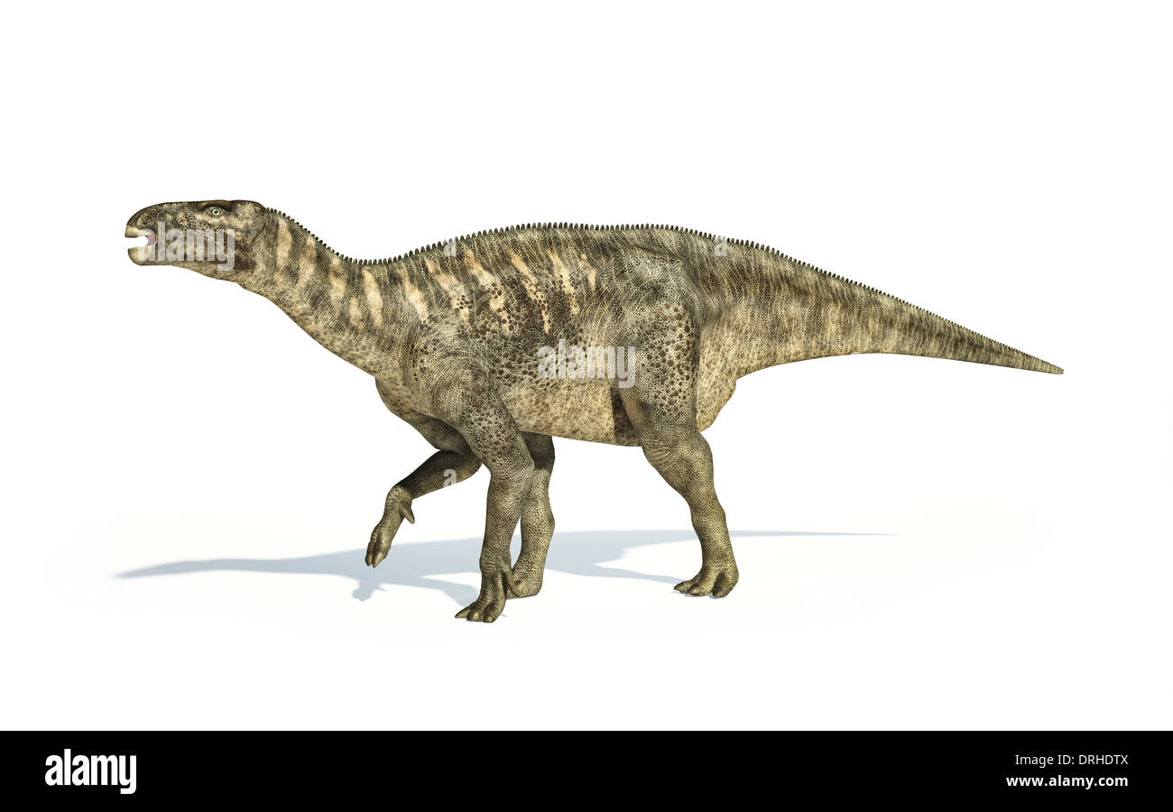 Iguanodon Dinosaur photo-realistic and scientifically correct representation, side view. On white background and - Stock Image