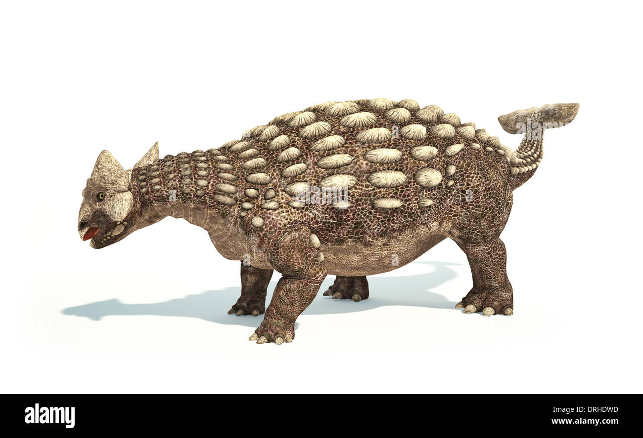Ankylosaurus Dinosaur photo-realistic and scientifically correct representation. Dynamic posture. On white background. - Stock Image