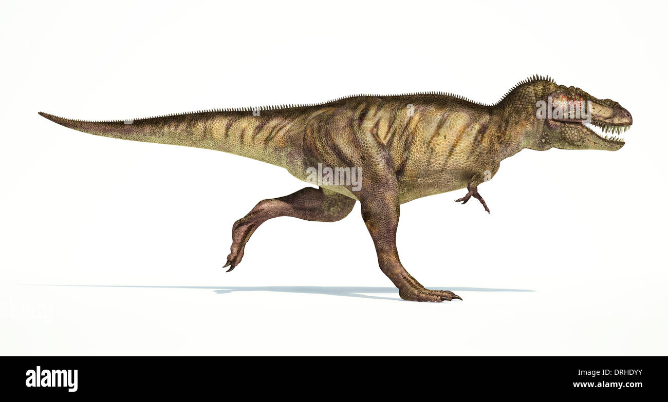 Tyrannosaurus Rex Dinosaur Full Body Photo Realistic Representation Stock Photo Alamy