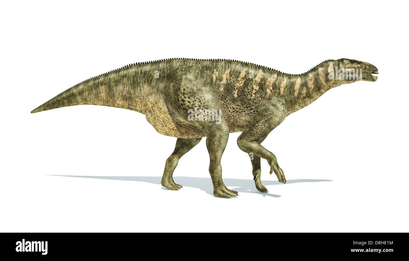 Iguanodon Dinosaur photo-realistic and scientifically correct representation, side view. On white background and drop shadow. - Stock Image