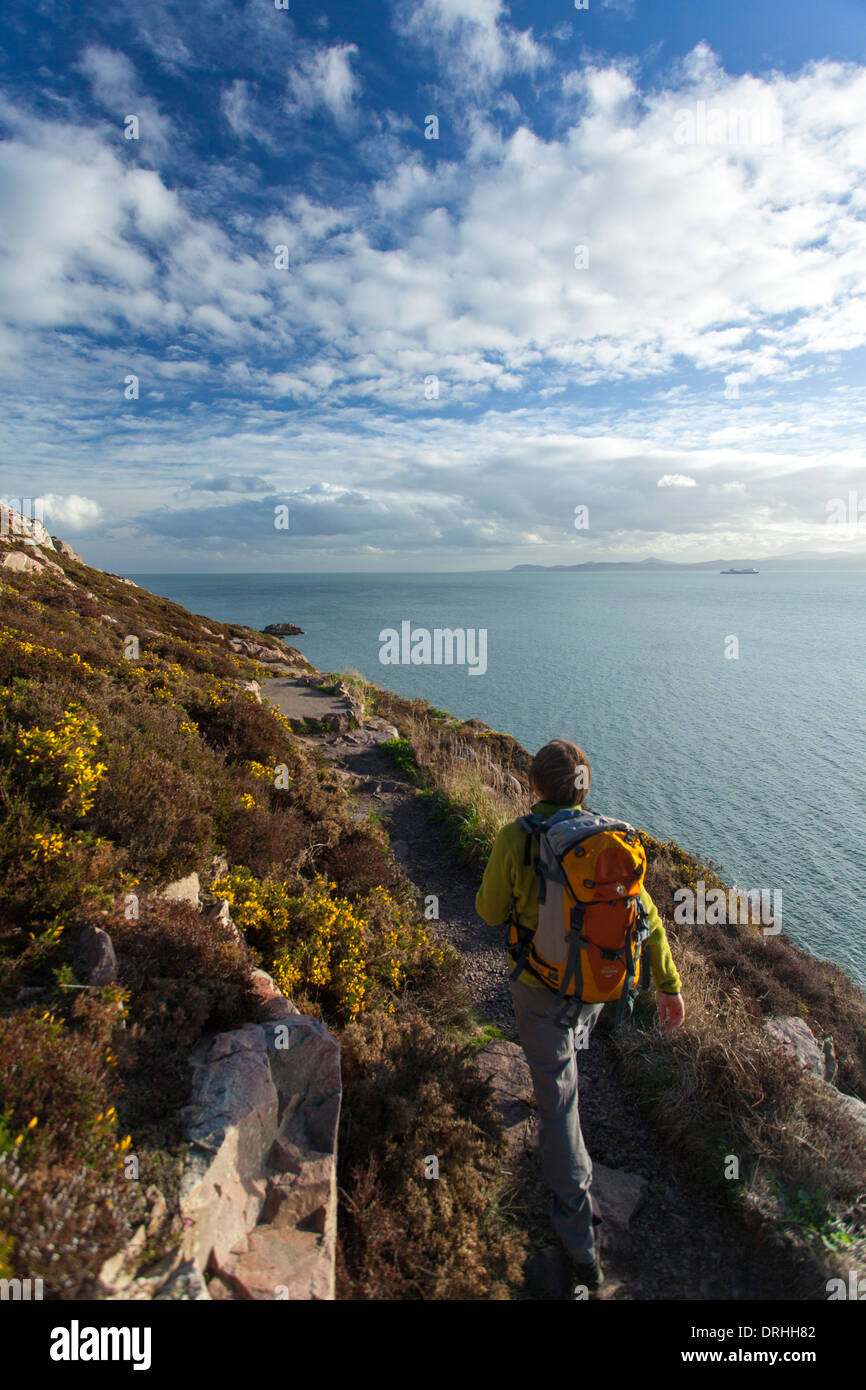 Walker on the Bog of Frogs Loop near Red Rock, Howth Coastal Path, County Dublin, Ireland. Stock Photo