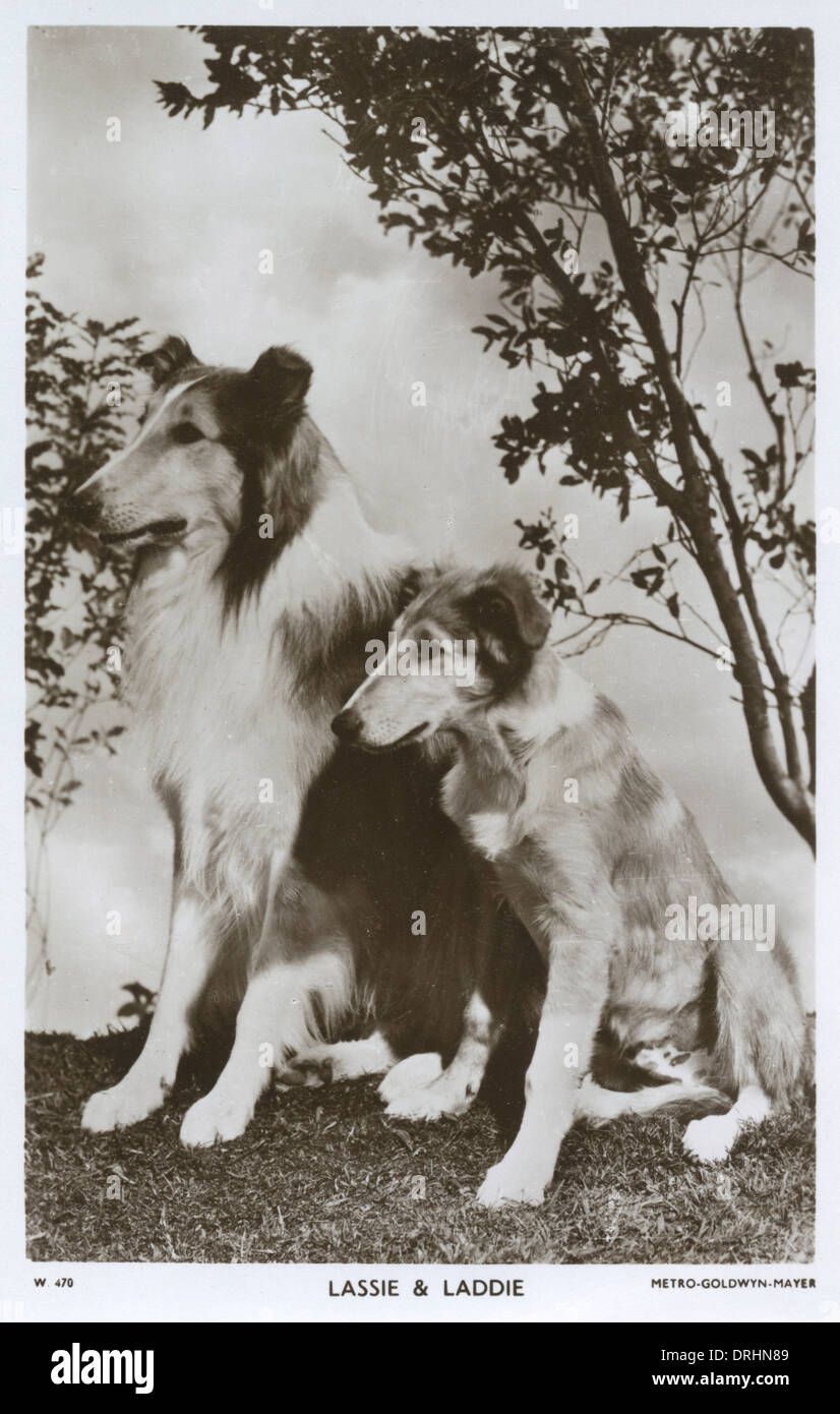 Lassie and Laddie - Movie star dogs - Stock Image