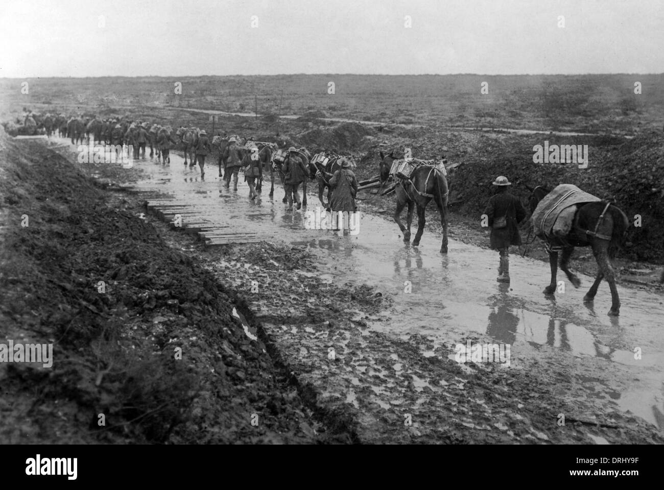 Ammunition on pack mules, Western Front, France, WW1 - Stock Image