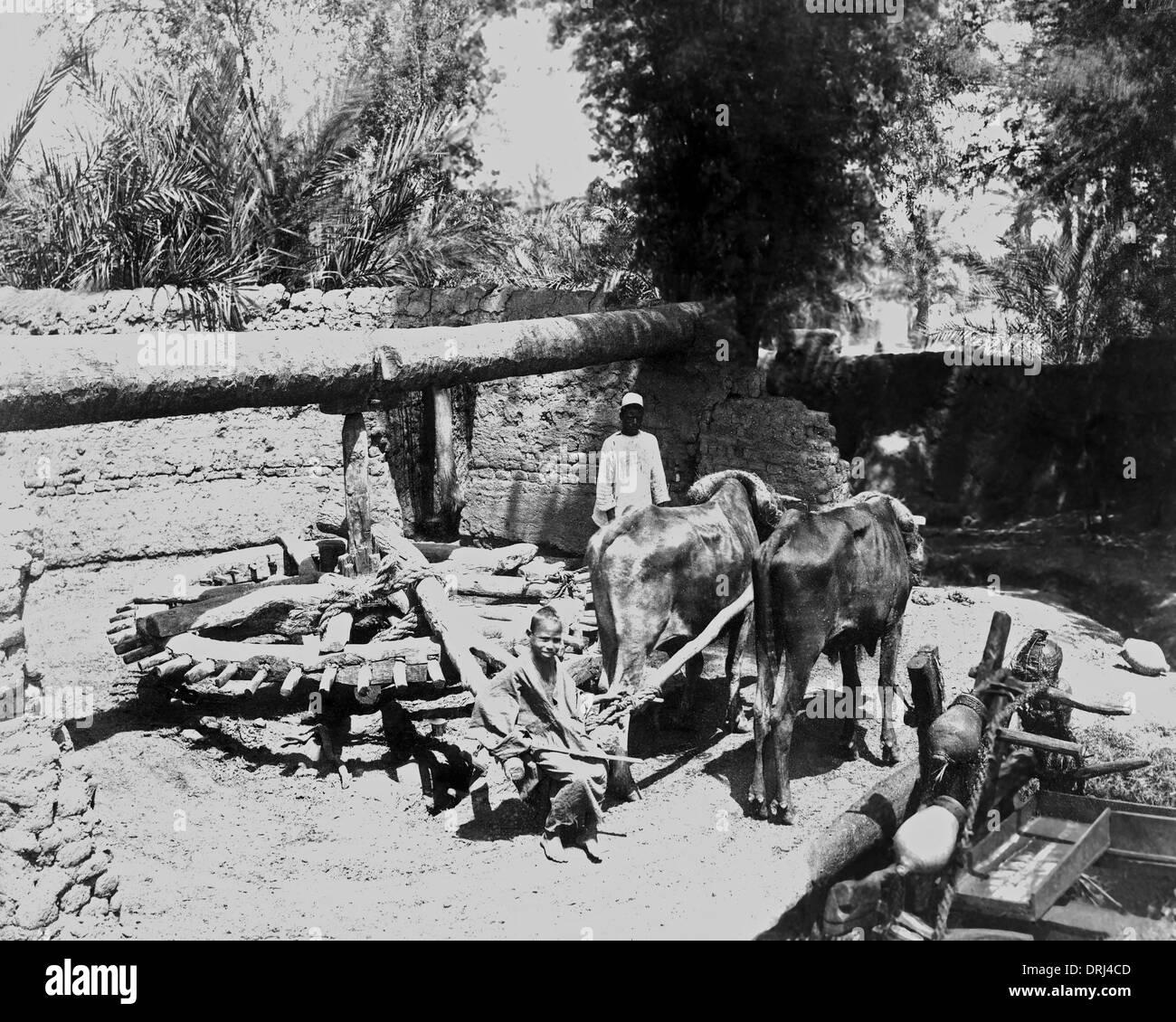 Bullock-driven water pump, Egypt - Stock Image