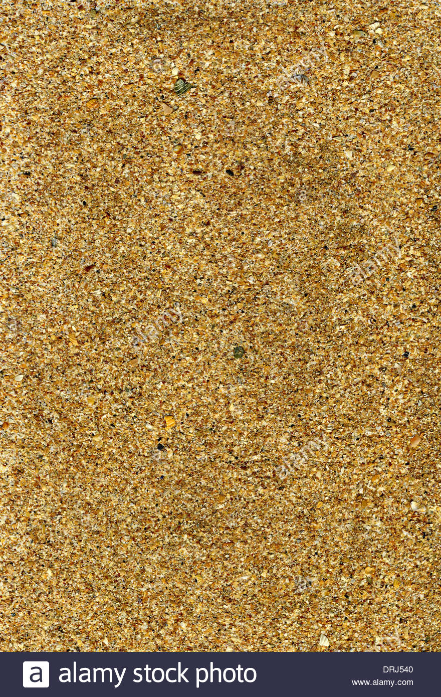 sand texture background with shell pieces great detail - Stock Image