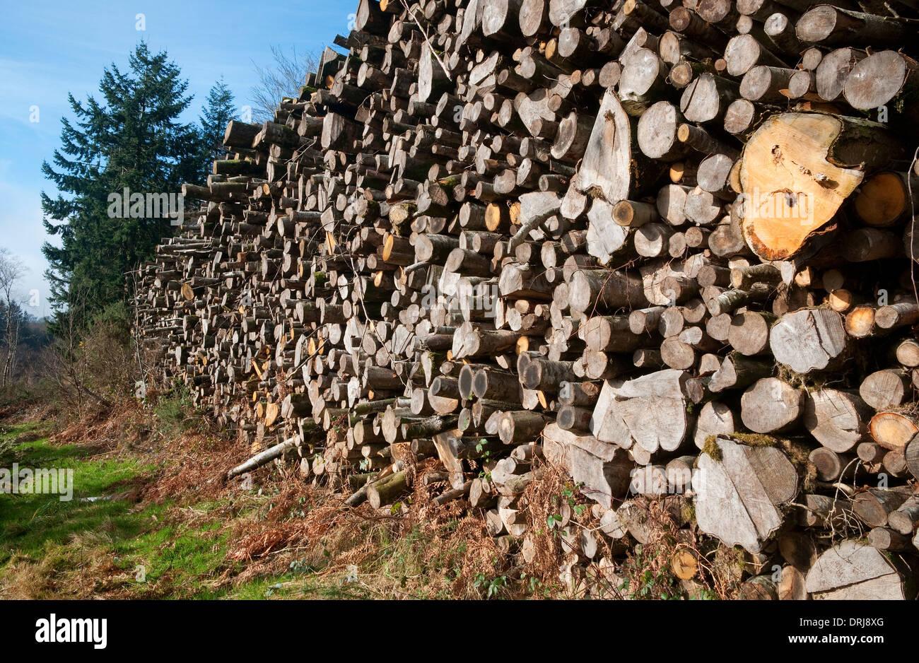 saint sever forest national park, calvados, normandy, france - Stock Image