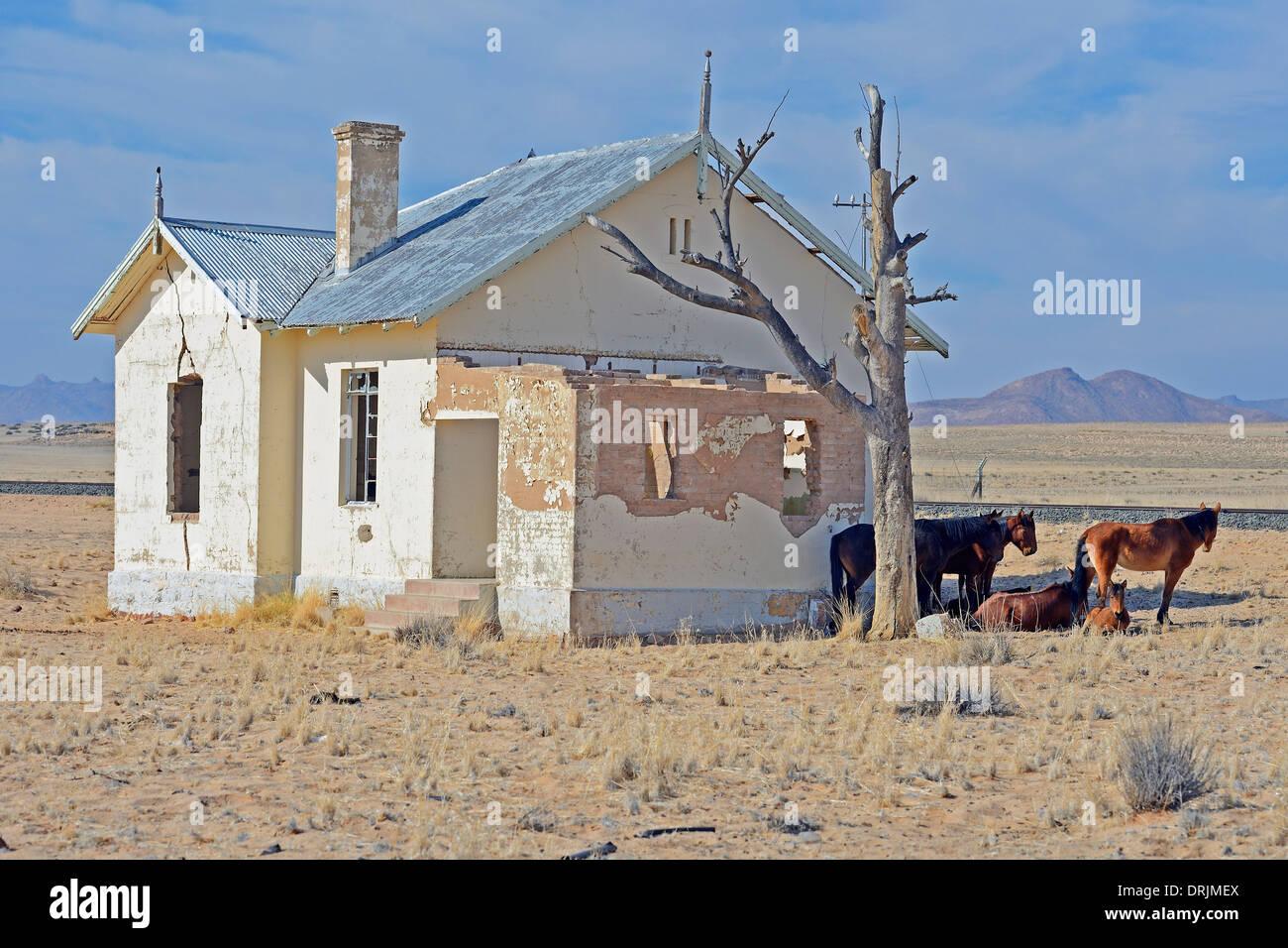 Wild horses to dilapidated road court building of Garub with From, Namibia, Africa, Wildpferde an verfallenen Bahnshofsgebaeude Stock Photo